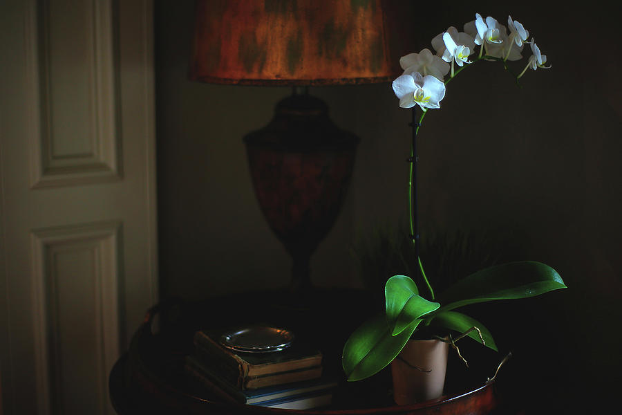Orchid Photograph - Orchid Morning by Paul Green