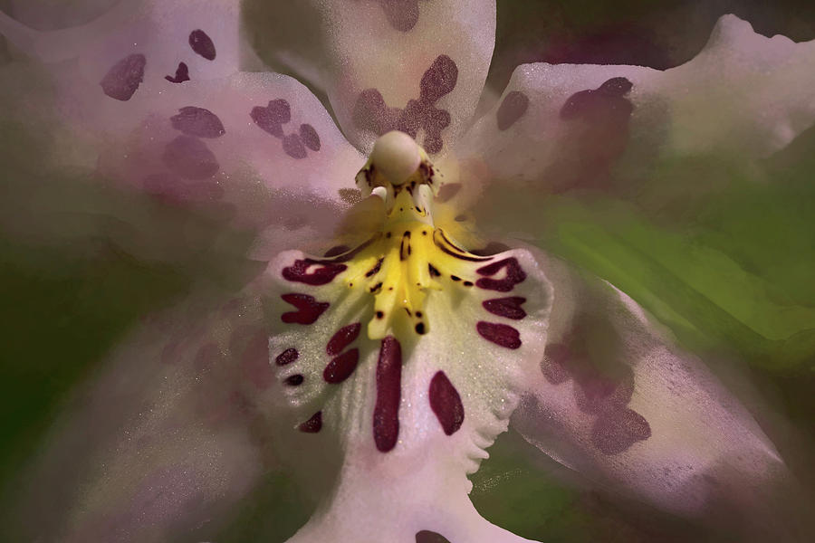 Orchid Mysterious by Richard Goldman