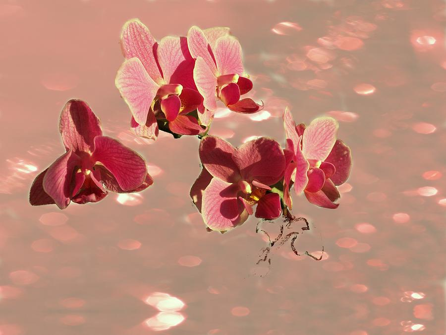 Flowers Photograph - Orchid Petals In Pink by Irma BACKELANT GALLERIES