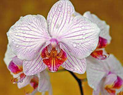 Orchid Series 1 Photograph by Mickie Boothroyd