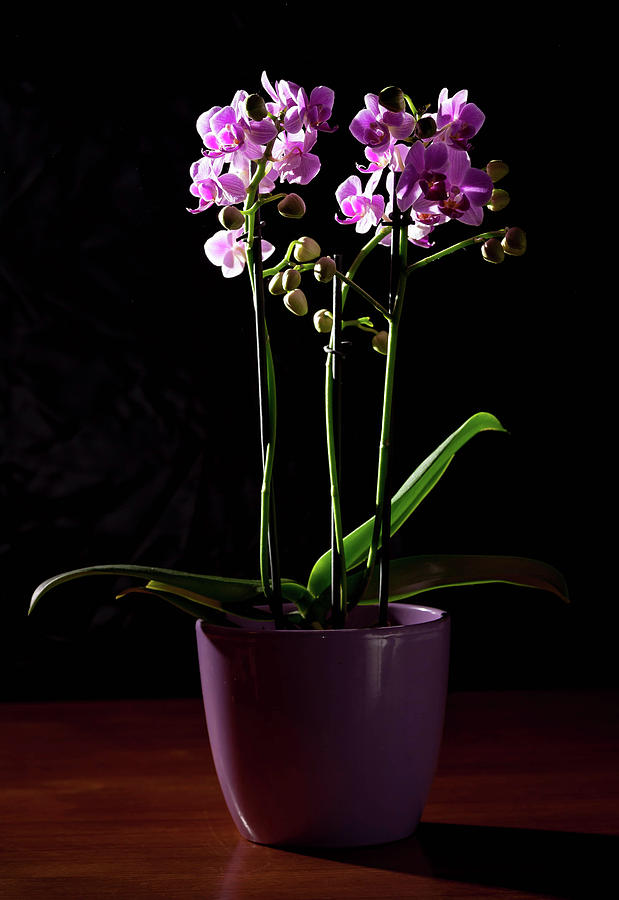 Orchid Photograph - Orchid by Stefan Rotter