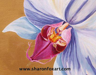 Floral Painting - Orchid Study Phalaenopsis by Sharon Fox-Mould