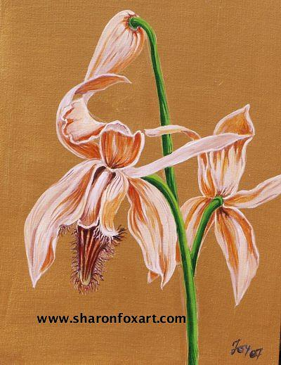 Floral Painting - Orchid Study by Sharon Fox-Mould