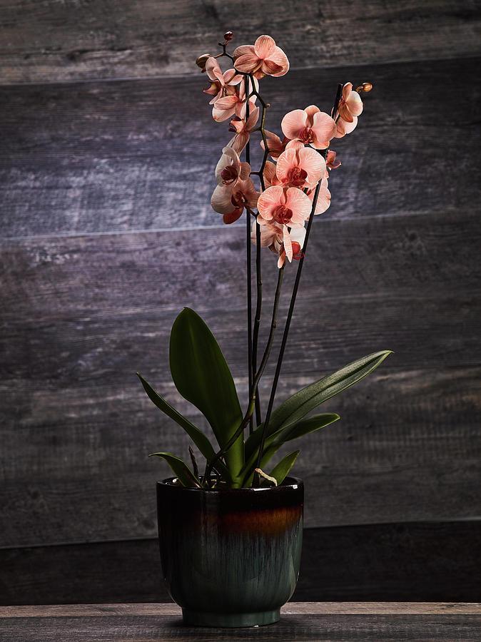 Orchid by Teresa Mann