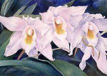 Orchid Painting - Orchid Trio by Gail Ribas