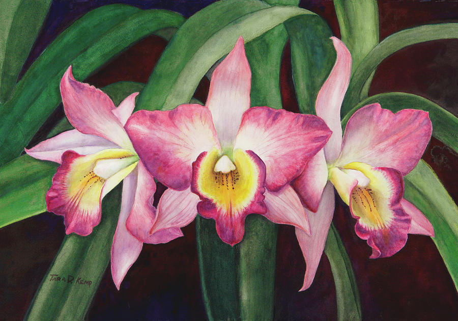 Orchid Painting - Orchid Trio by Tara D Kemp