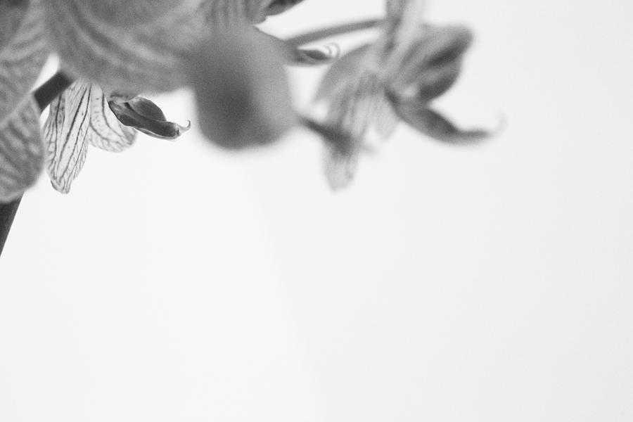 Minimal Photograph - Orchidaceae by C Planeta