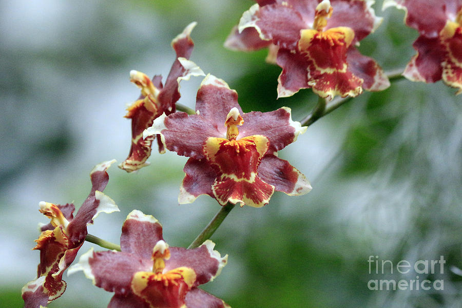 Orchids 3 by Jamie Smith