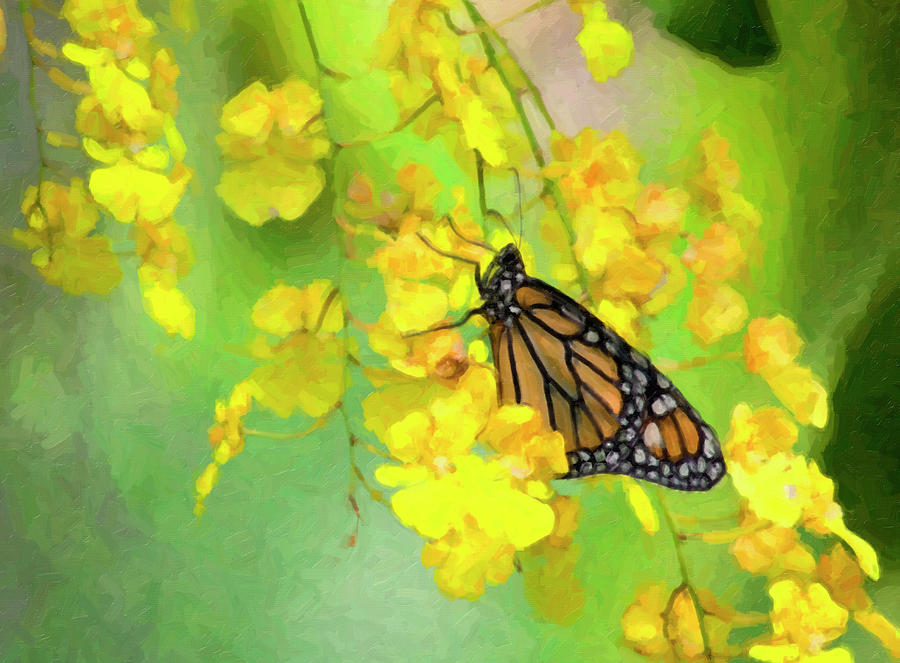 Monarch Digital Art - Orchids and Butterfly Painting by Jill Lang