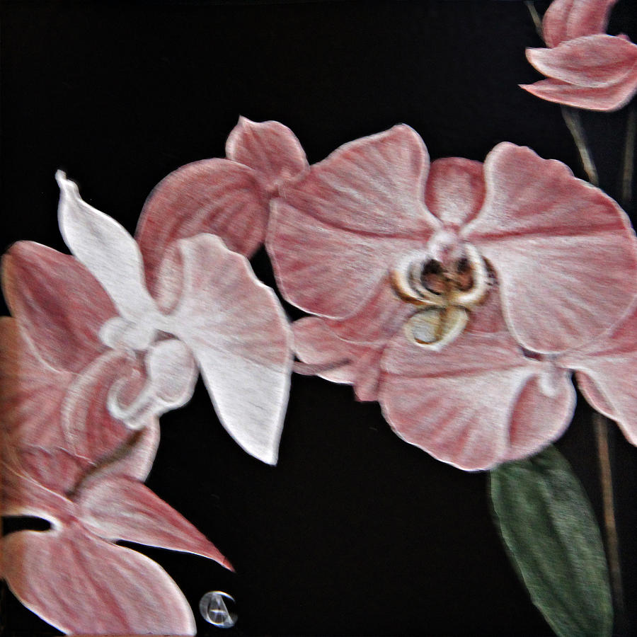 Orchids by Angie Cockle
