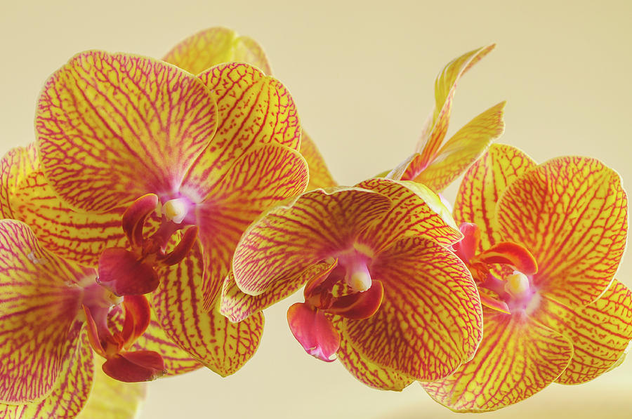 Orchids by Bob Grabowski