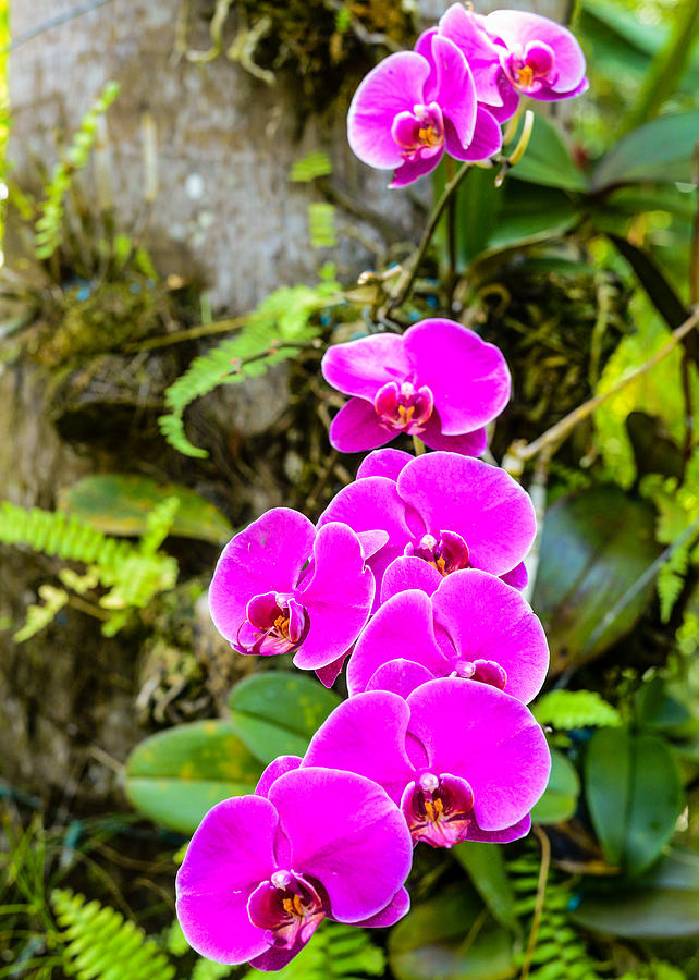 Orchids by Daniel Marcion