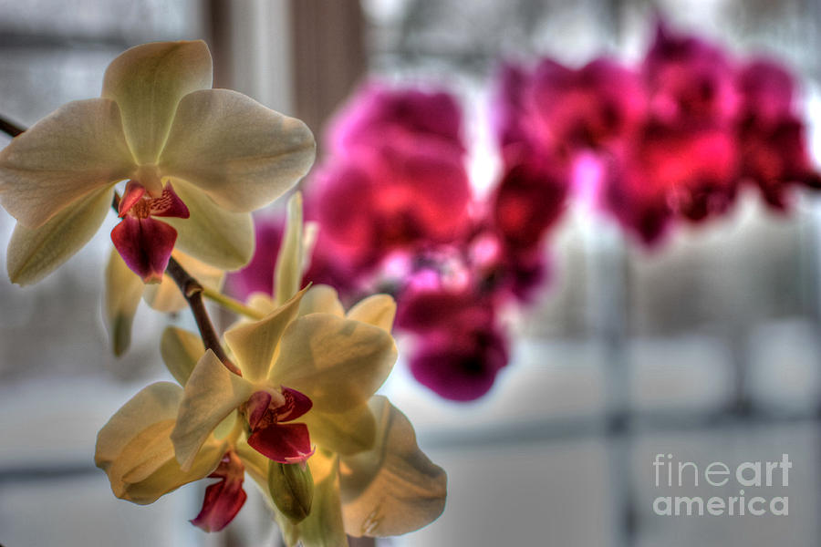 Orchids Photograph - Orchids by David Bearden