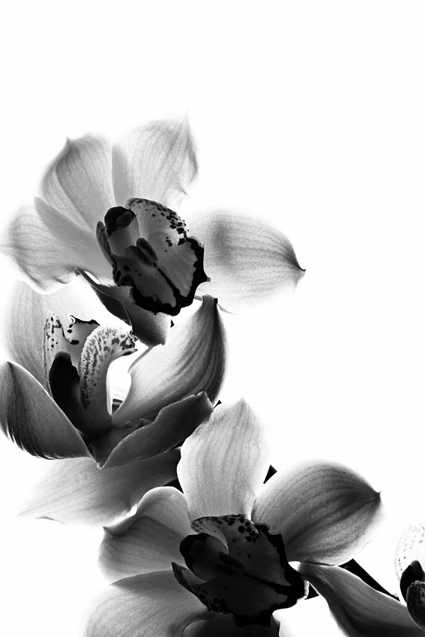 Orchid Photograph - Orchids by Fine Arts