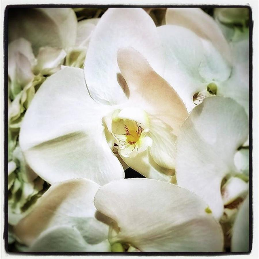Florists Photograph - Orchids For His Majesty. In Loving by Mr Photojimsf