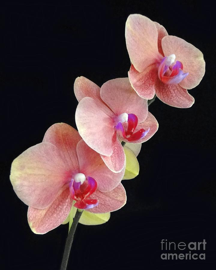 Orchids Reach For The Rainbow Photograph