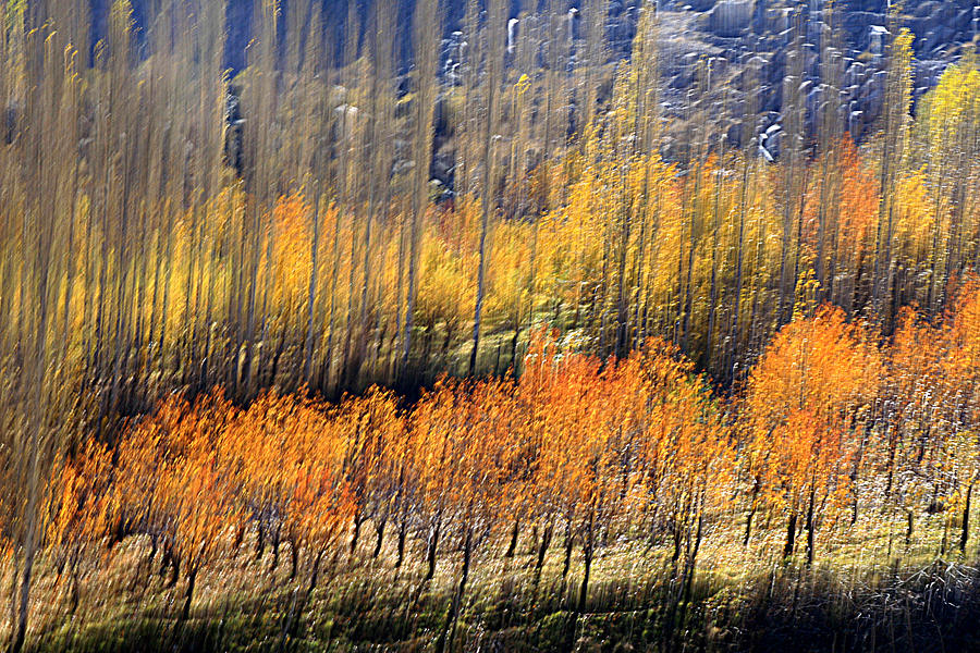Autumn Photograph - Ordered by Robert Shahbazi