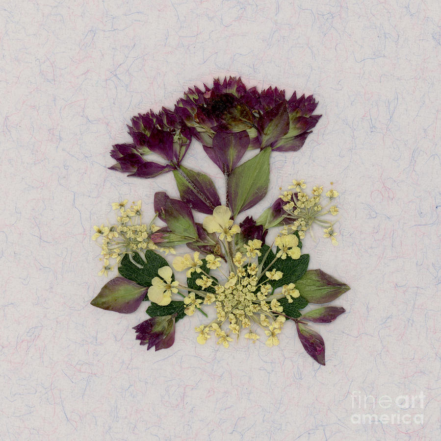 Oregano Florets and Leaves Pressed Flower Design by Em Witherspoon