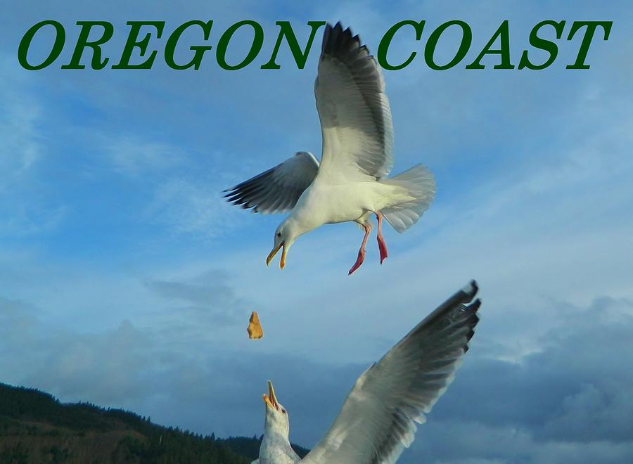 Oregon Coast Amazing Seagulls by Gallery Of Hope