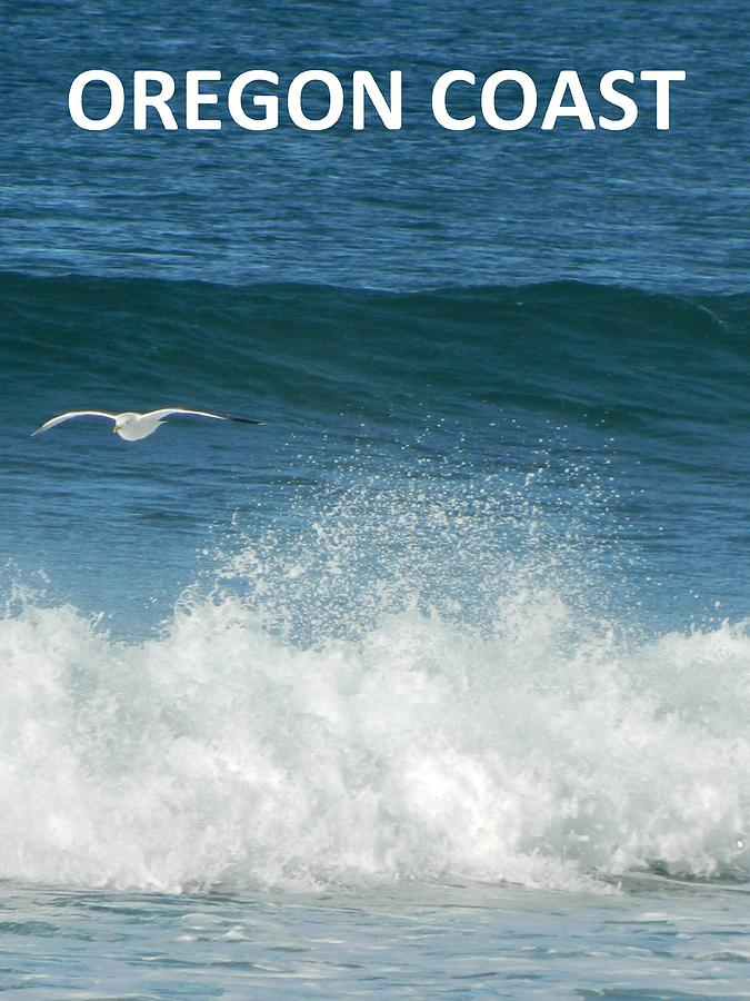 Seagulls Photograph - Oregon Coast Flying Seagull by Gallery Of Hope