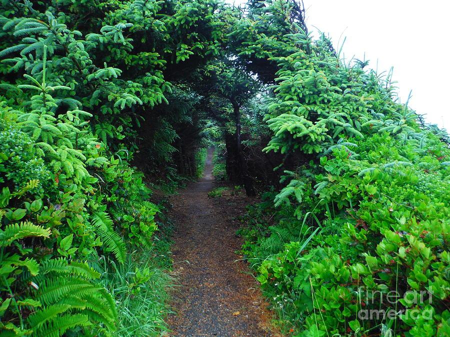 Oregon Coastal Trail by Paddy Shaffer