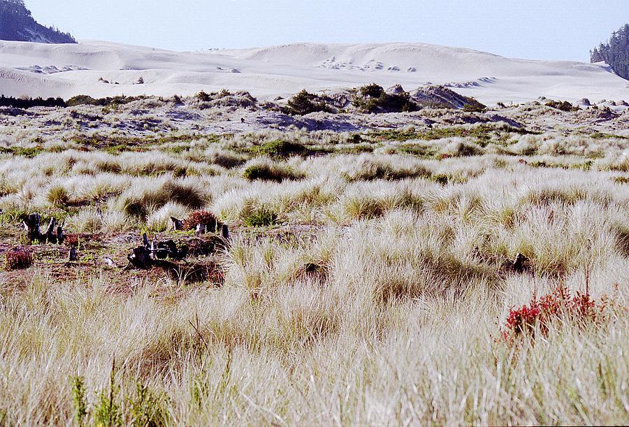 Dunes Photograph - Oregon Dunes 6 by Eike Kistenmacher
