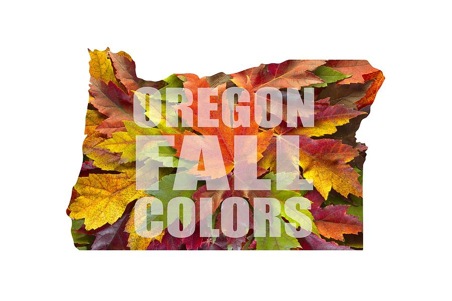 Oregon Maple Leaves Mixed Fall Colors Text Photograph by David Gn