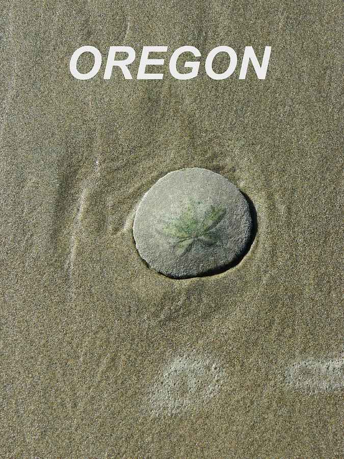 Sand Dollar Photograph - Oregon Sand Dollar by Gallery Of Hope