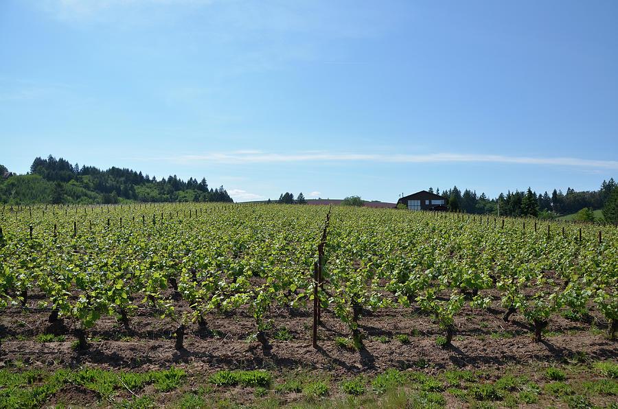 Oregon Winery by Erik Burg