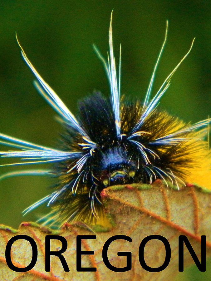 Oregon Photograph - Oregon Woolly Bear by Gallery Of Hope