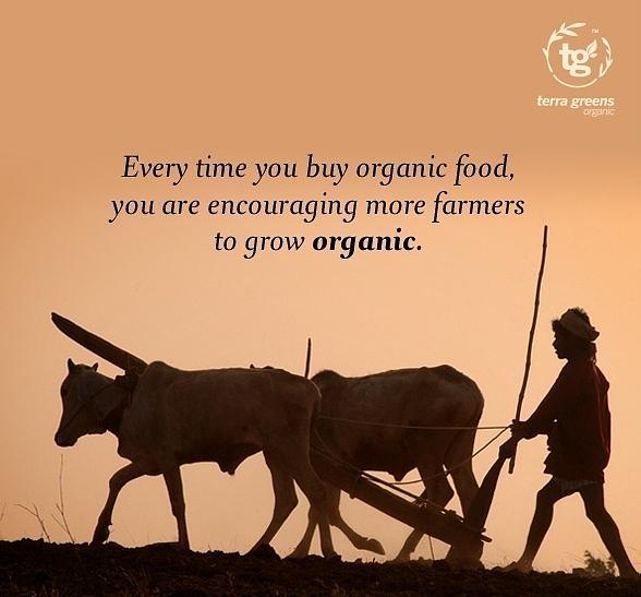 Organic Food Photograph - Organic Food by Terra Greens