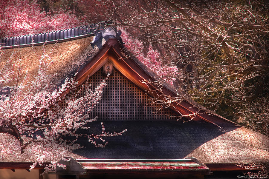 Savad Photograph - Orient - Shofuso House by Mike Savad