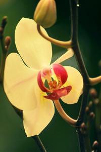Orchid Photograph - Oriental Orchid by Deborah  DeAmroim
