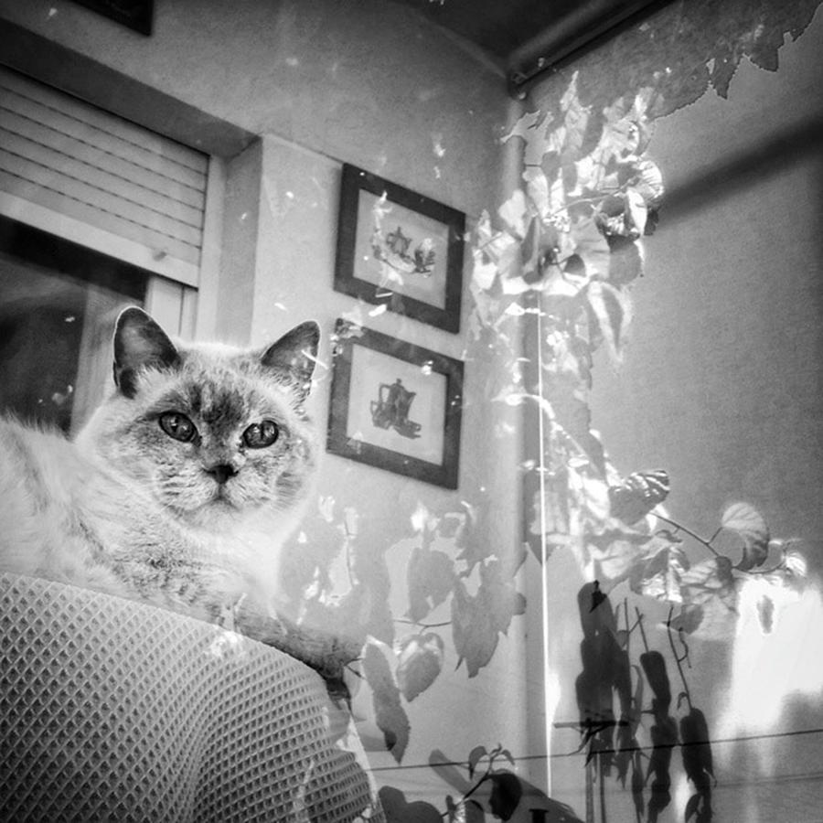 Home Photograph - Orlando The Cat by Rafa Rivas
