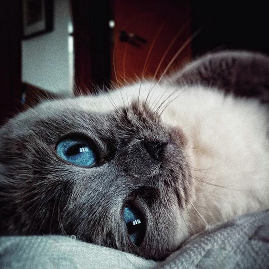 Home Photograph - Orlando  #cat #catslovers #pet by Rafa Rivas