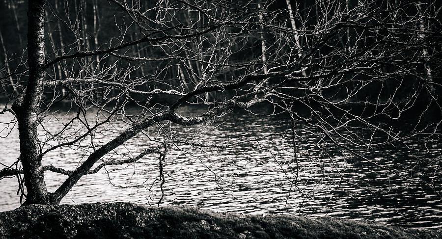 Matti Ollikainen Photograph - Orlok by Matti Ollikainen