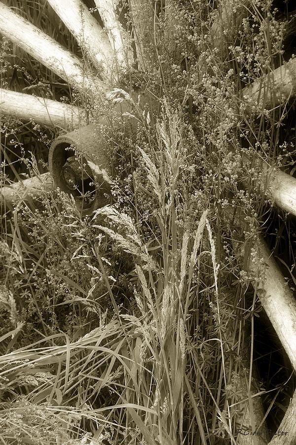 Abandoned Photograph - Ornament For A Wild Garden by RC DeWinter