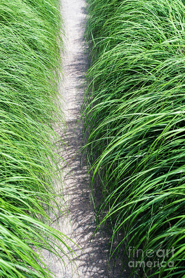 Ornamental Grass And Path Photograph By Tim Gainey