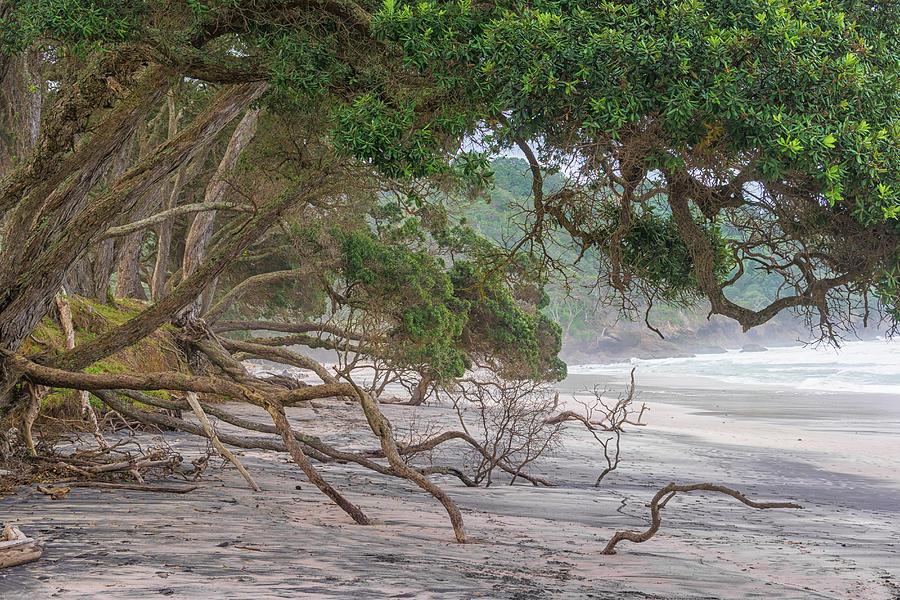 Beach Photograph - Orokawa Bay by Martin Capek