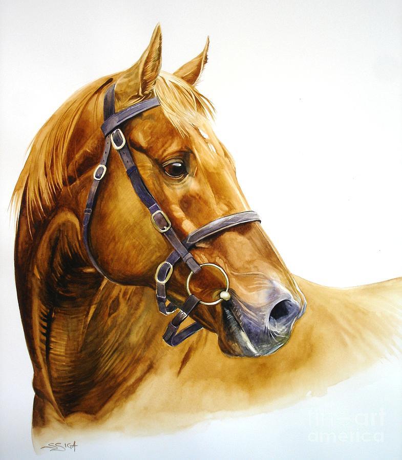 Horse Painting - orphan - Champion Polo Pony by Sabrina Siga