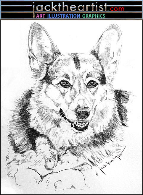 Corgi Drawing - Oscar by Jack Knight