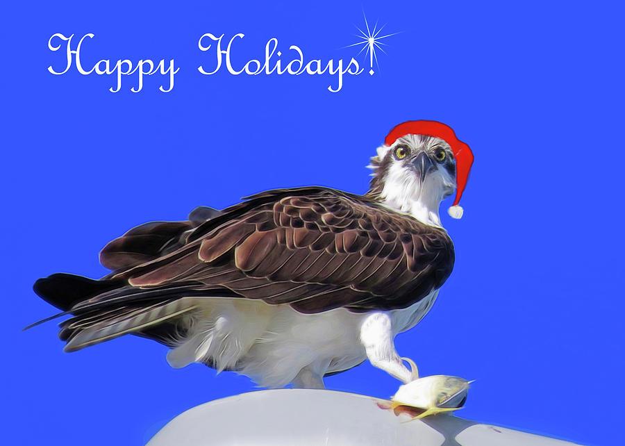 Osprey at Christmas by A H Kuusela