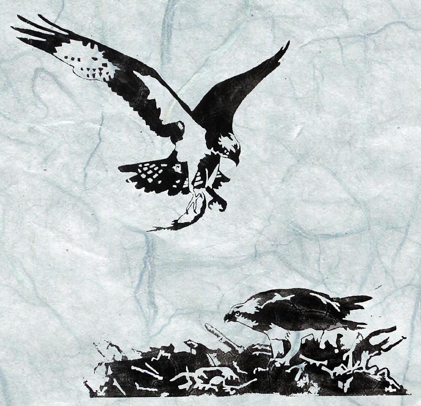 Osprey Painting - Osprey by Becca Thorne