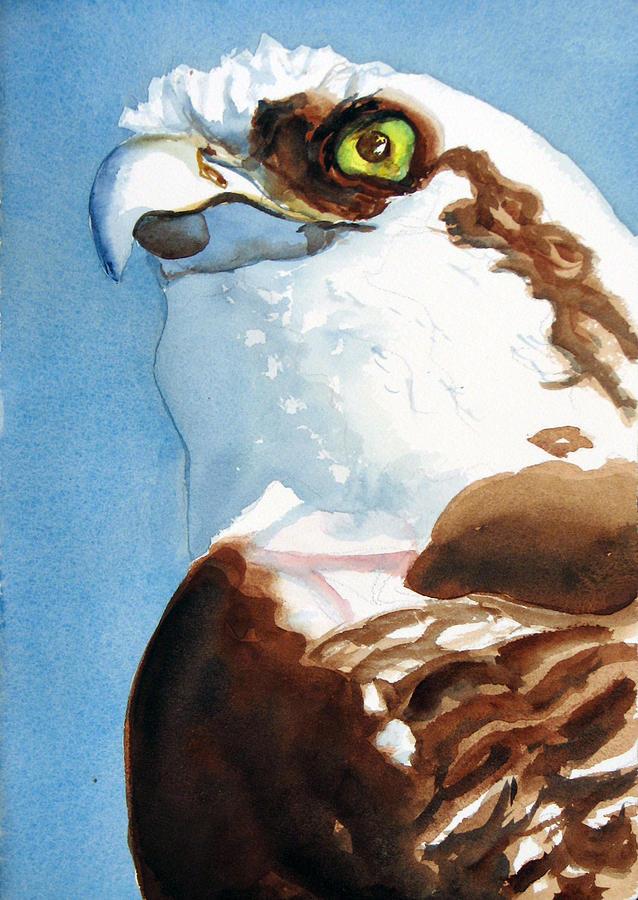 Osprey Painting - Osprey Eye by Libby  Cagle