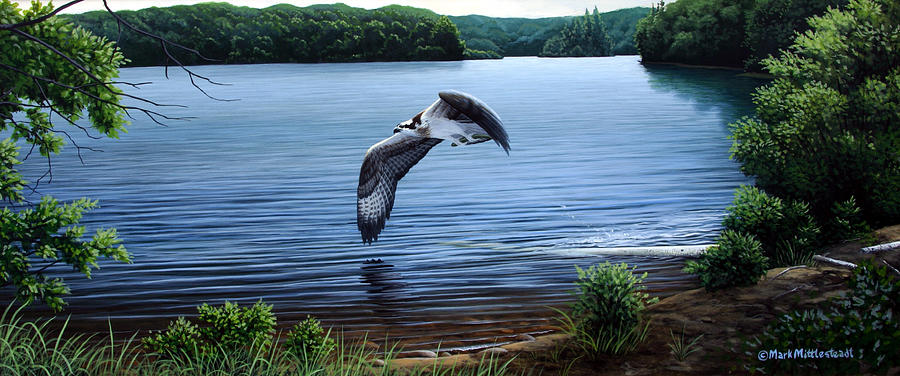 Osprey Painting - Osprey Over Clear Lake by Mark Mittlesteadt