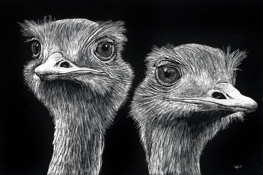 Ostrich Pair by William Underwood