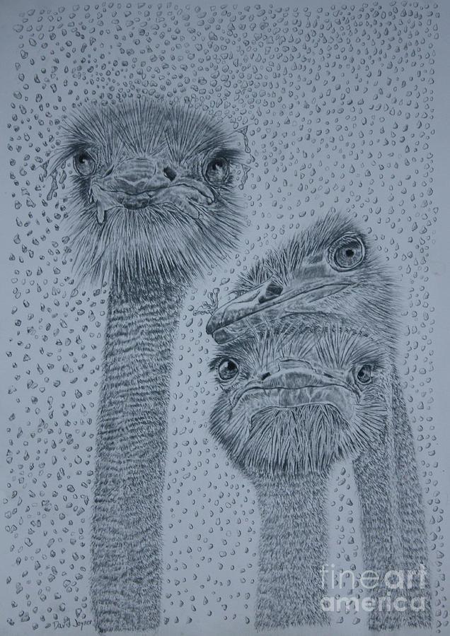 Ostrich Umbrella by David Joyner
