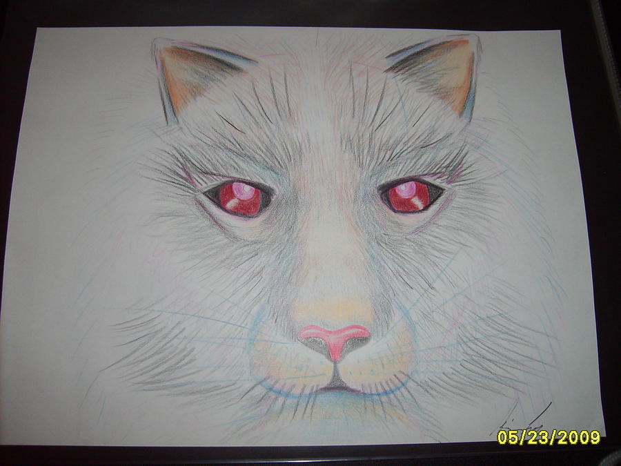Cat Drawing - Otherworldly by Aimee Ley