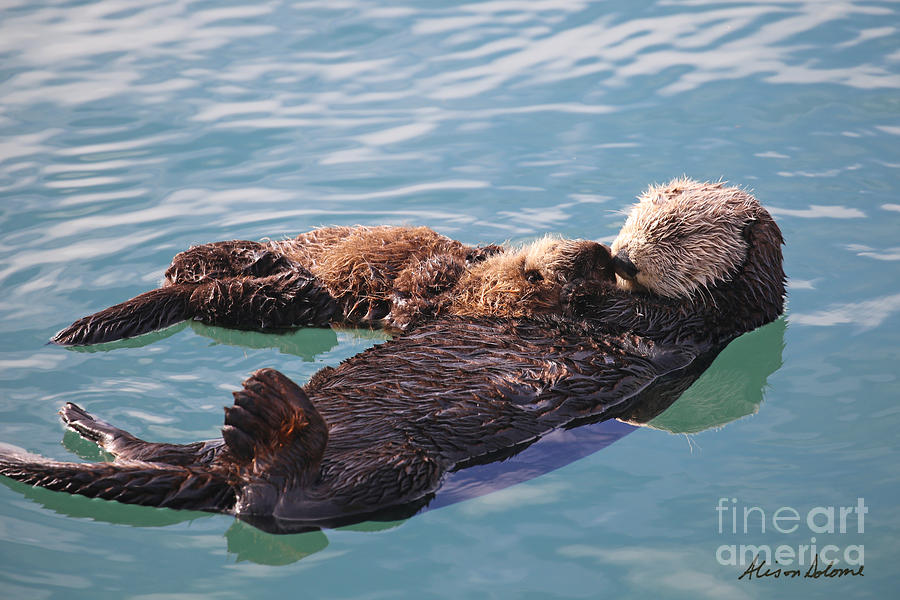 OTTER MOM AND PUP by Alison Salome