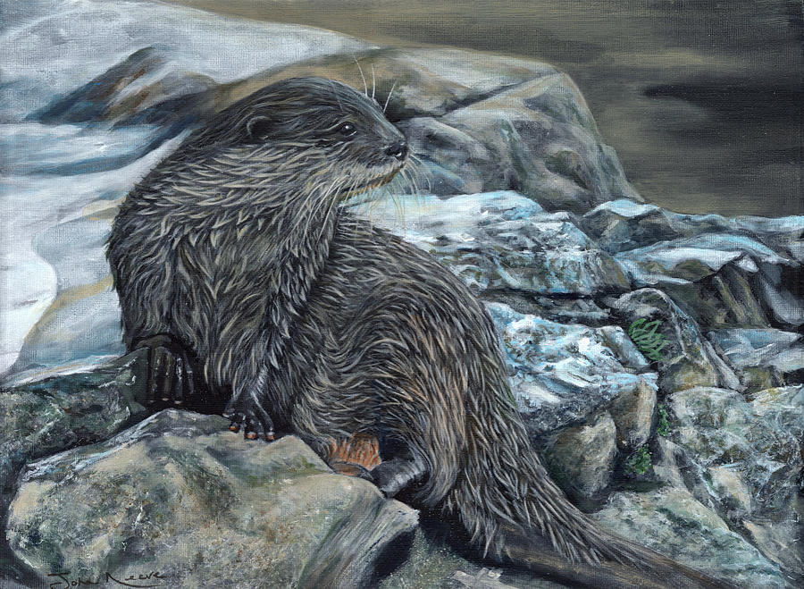 Otter on Rocks by John Neeve